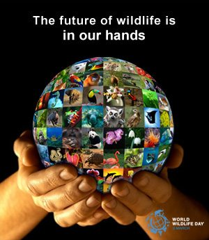 World Wildlife Day - The Future of Wildlife is in Our Hands